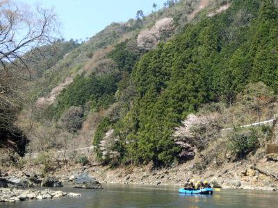 桜の咲く保津川ラフティングコース